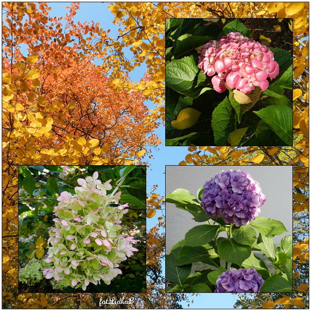 Jesień w Ogrodzie Botanicznym we Wrocławiu