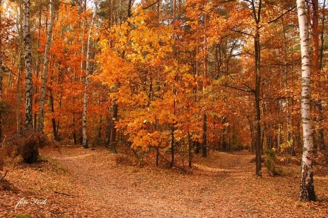 rozstaj dróg w lesie