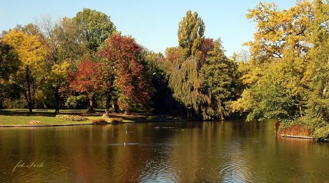 staw w parku