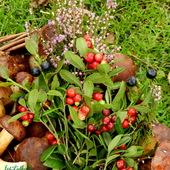 Borówki,grzyby-dary lasu.