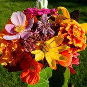 Bukiecik jesiennych kwiatów.