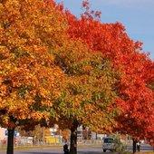 drzewa w mieście