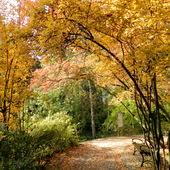 ,,Jesień idzie przez park,,