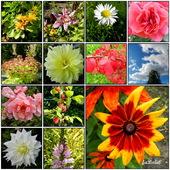 Jesienne kwiaty w moim ogrodzie.