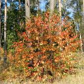 Kolorowa  jesień, w lesie.