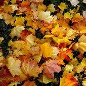 prawdziwa jesień