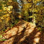 Zapraszam na jesienny spacer po lesie.