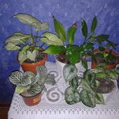 Zielony stoliczek roślin