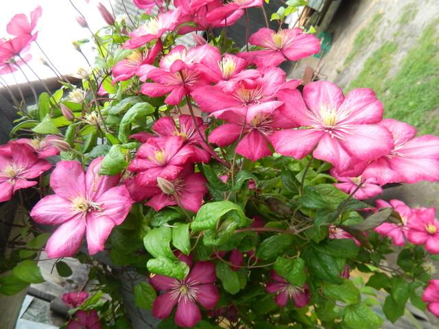 Różowych snów i spokojnej nocy:)