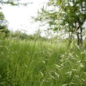dzisiaj trawy