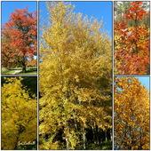 Drzewa jesienią.