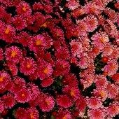 dywanik kwiatowy