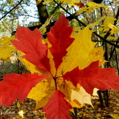 Kolorowe, jesienne liście