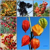 Owoce jesieni.