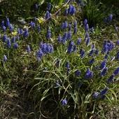 w kolorze blue