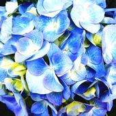 w niebieskim kolorze
