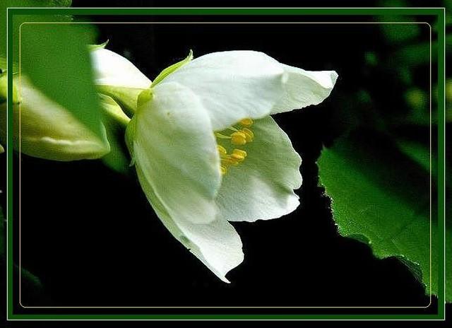 Biały, wiosenny, pachnący