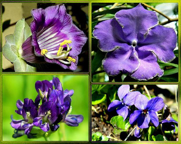 Odcienie fioletu