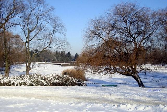 śnieg w parku