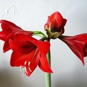 Grudniowe kwiatki