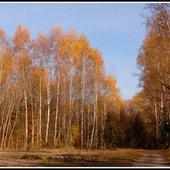 obraz jesienny