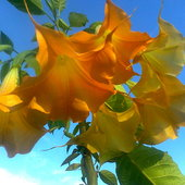 Słoneczne dzwony:)