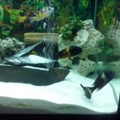 trofeusy super rybki