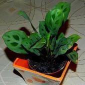 Troszkę zieleni :)
