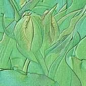 w zielonej tonacji