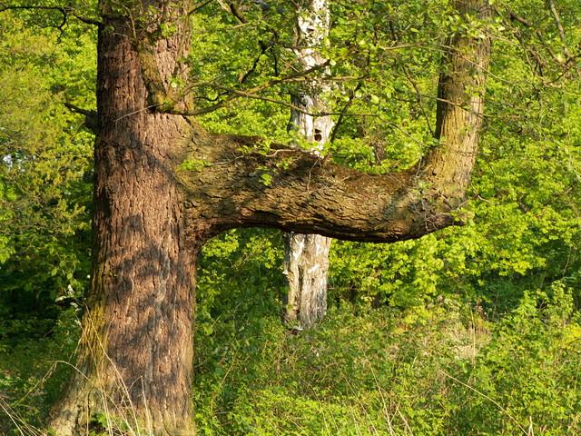 Ciekawe drzewo.