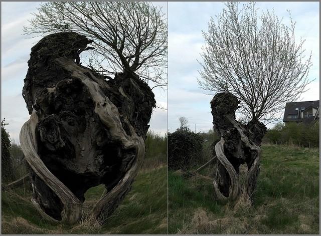 Drzewo ..