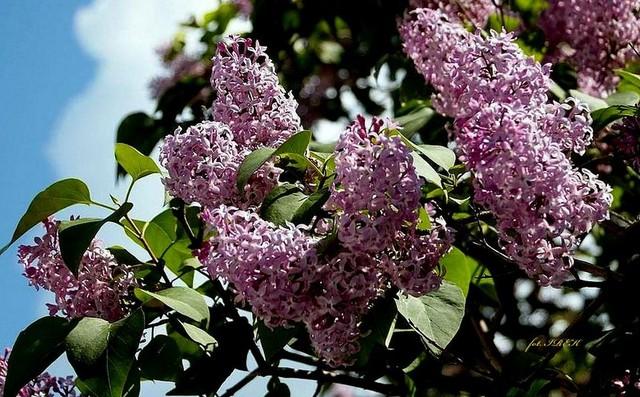 Majowe kwiaty