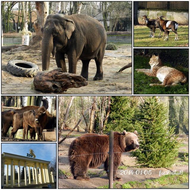 Ogród Zoologiczny we Wrocławiu.