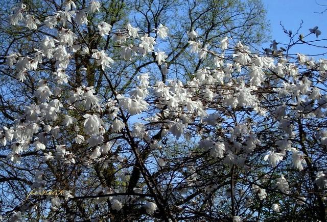 Piękna wiosna