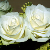 Białe róże.