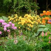 część ogródka