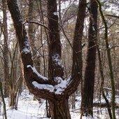 drzewo potrójne