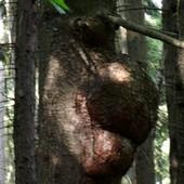 Dziwne drzewo.