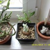 Jedni śpią a inni chcą kwitnąć :))