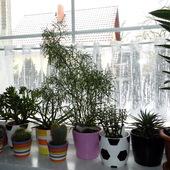 Moje rośliny  doniczkowe.