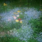 niebieska wiosna