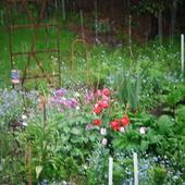 niebieski- to pierwszy kolor ogródka wiosną