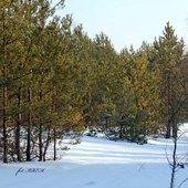 Piękna zima