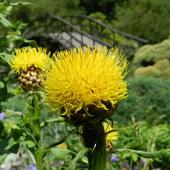 Słoneczny kwiat.