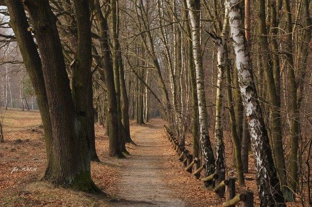 Aleja drzew