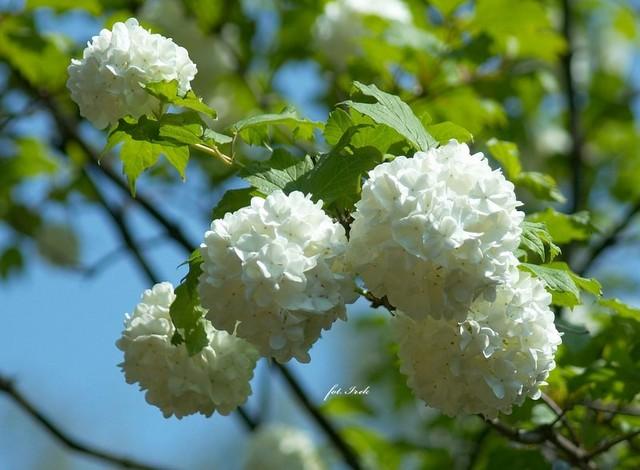 Bardzo wiosennie