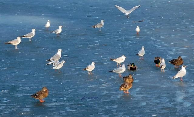Ptaki w parku
