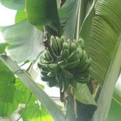 bananowiec z owocami