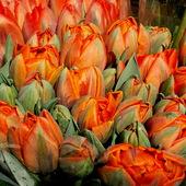 Bukiet wiosennych kwiatów.