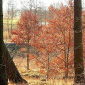 Bukowe drzewka na skraju lasu.